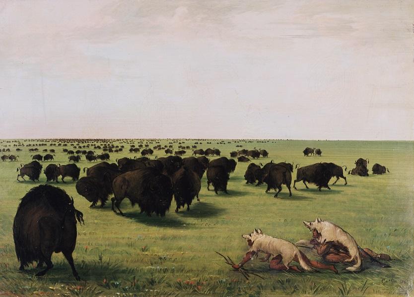 Historisches Gemälde von George Catlin, Bisonjagd in Wolfs-Verkleidung