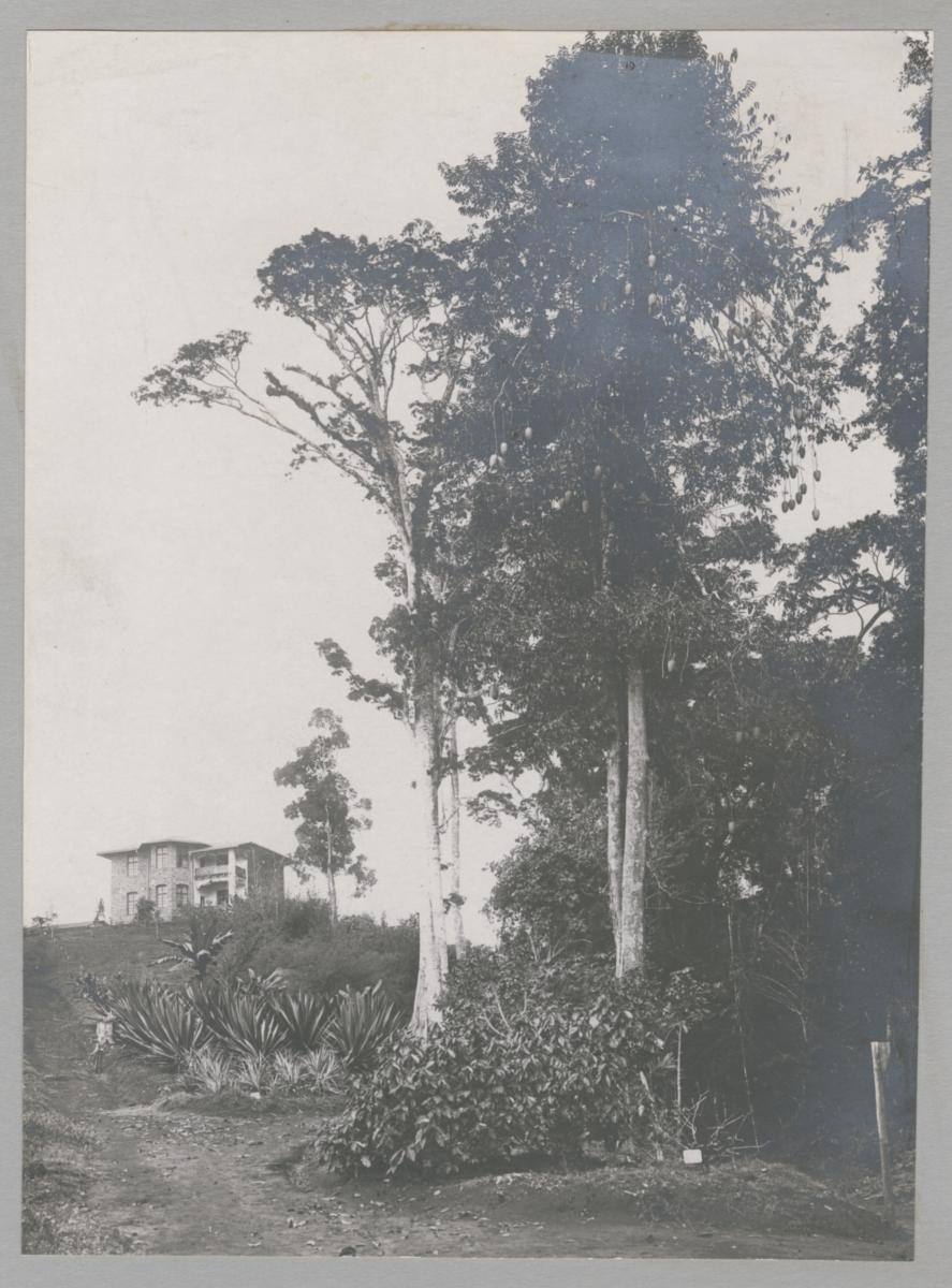 Director Stuhlmann's house