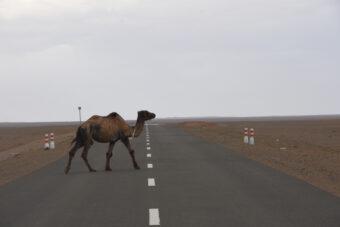 Neue Straße in der Wüste Gobi, Mongolei 2018