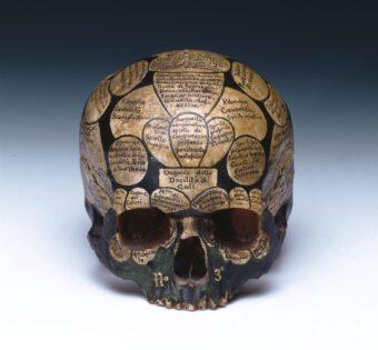 Schädel, auf dem die Areale des Gehirns auf Italienisch beschriftet wurden
